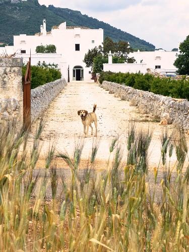 Hund Mediterranes Profil Parasiten