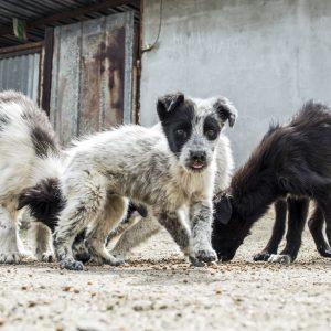Osteuropa Parasiten Hund
