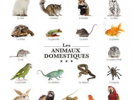 Wurmtest für andere Tiere