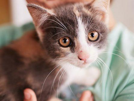 Wurmtest für Katzen