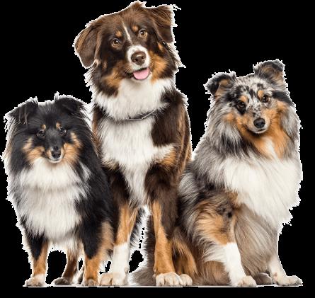 Wurmtest für Hunde