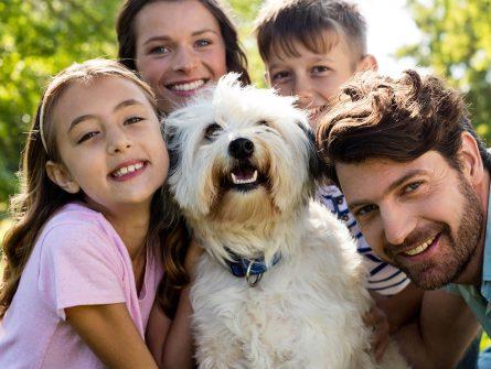Wurmtes für Hunde